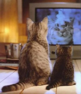 cat-watching-tv