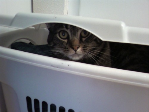 The laundry hamper is apparently the perfect place for an ambush.
