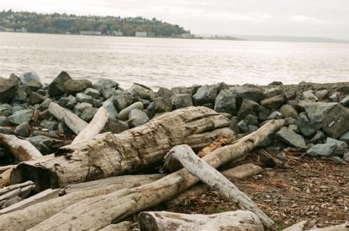 Beach Logs and Rocks